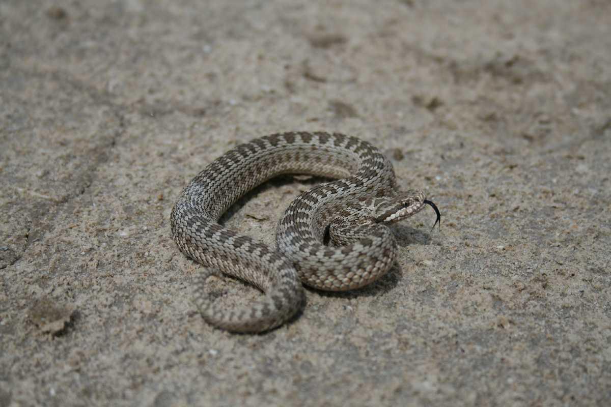 змеи ростовской области фото и названия вечер, этом